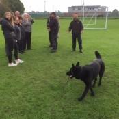 Dog Unit (6)